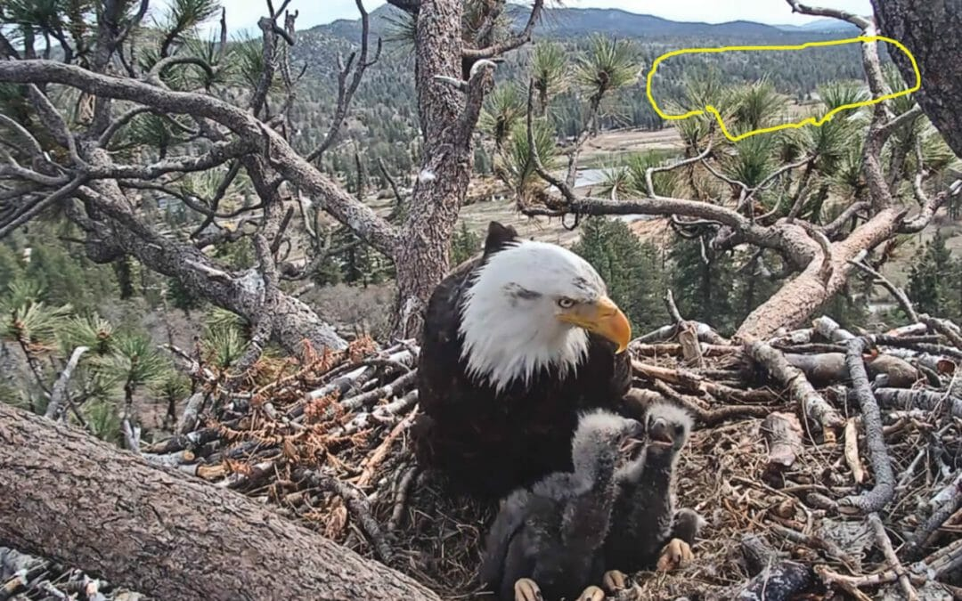 BIG BEAR'S FAMOUS BALD EAGLES AND PUBLIC SAFETY THREATENED BY PROPOSED DEVELOPMENT